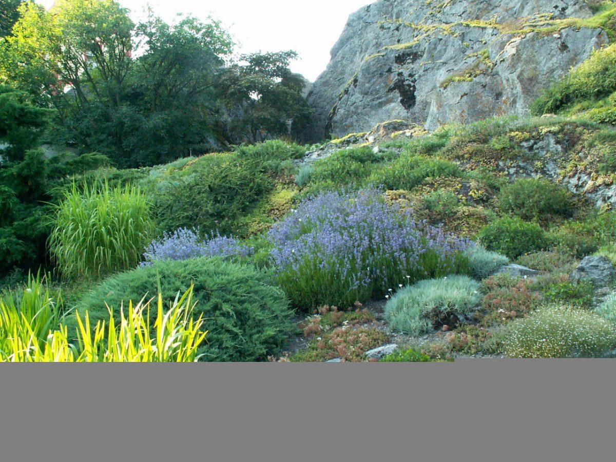 Idealne rośliny do przydomowego ogrodu w holenderskim stylu