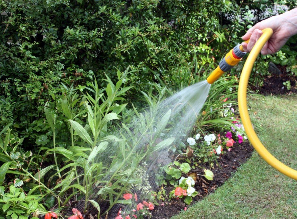 Idealne rośliny do przydomowego ogrodu w nowoczesnym stylu