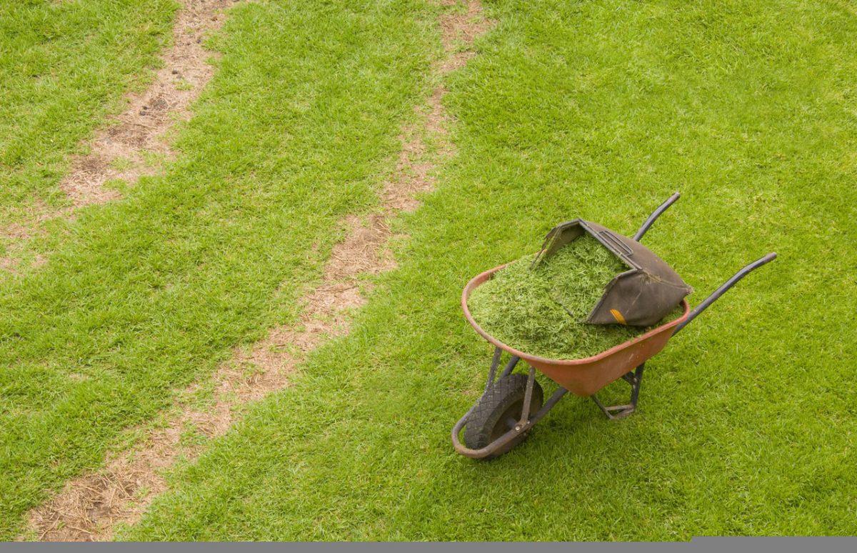 Lawenda: roślina idealna do przydomowego ogrodu